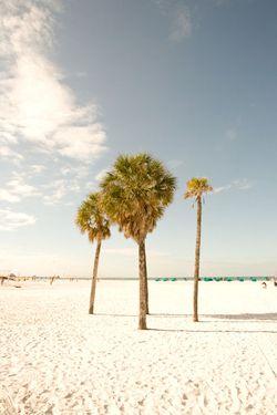 Tampa_0117